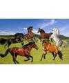 Placemat paarden 3d 30 x 40 cm
