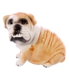 Spaarpot bulldog hond 12 cm