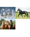 3x dieren magneten 3d paarden