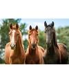 Dieren magneet 3d bruine paarden