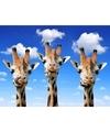 Dieren magneet 3d giraffes