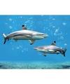 Dieren magneet 3d haaien