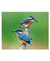 Dieren magneet 3d ijsvogeltjes