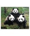 Dieren magneet 3d panda familie